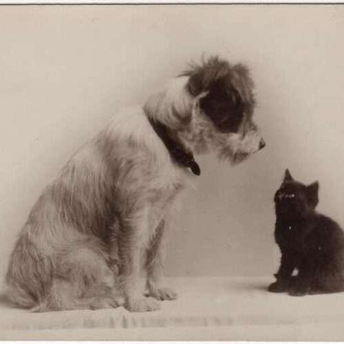1930s Dog & Kitten Post Card